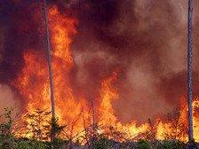 40 спасателей заблокированы огнем в Красноярском крае, им нечего есть еще с ...