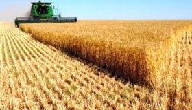 Увеличилась стоимость зерна на Урале и в Поволжье