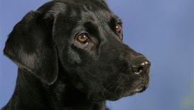 Наркоторговцы объявили «заказ» на пса — теперь его охраняют 9 телохранителей