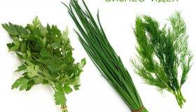 Выращивание зелени – петрушки, укропа, лука