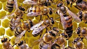 Производство мёда – сладкий и прибыльный бизнес!