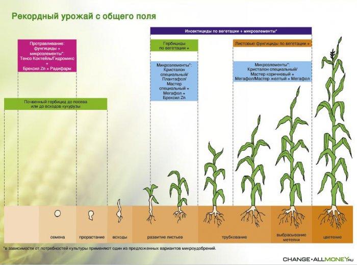 всего, технология возделывания основных полевых культур на семена представляем вниманию